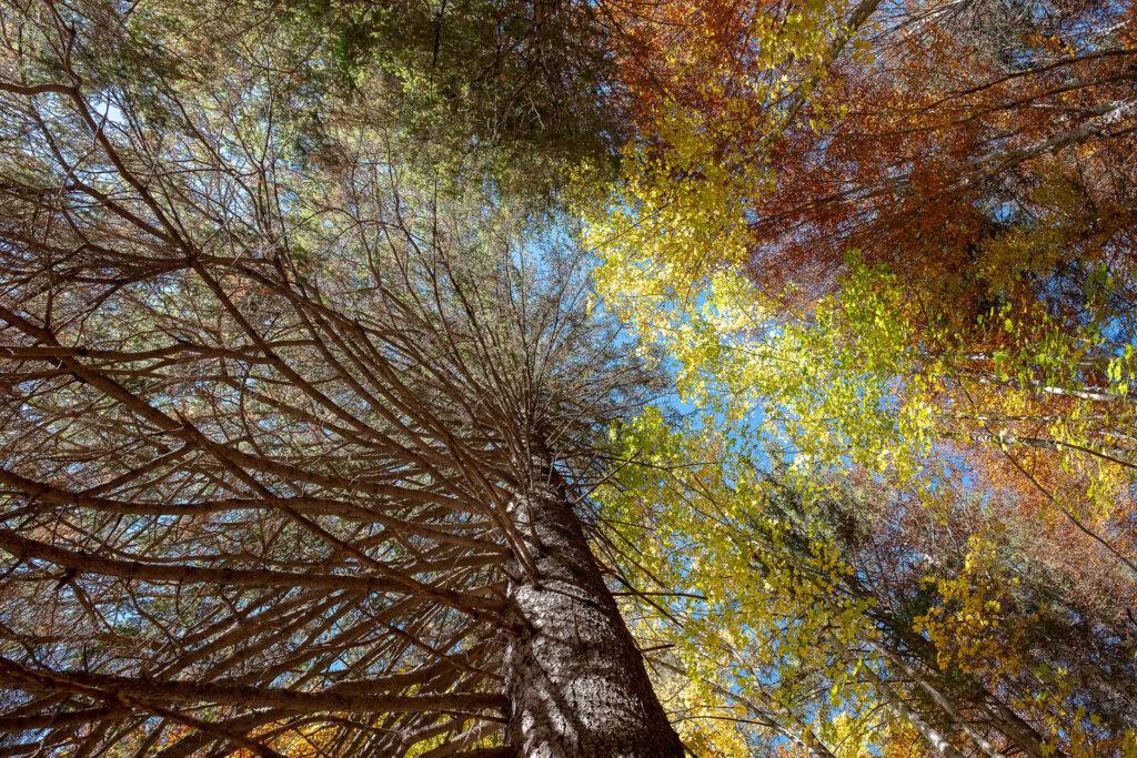 I colori dell'autunno: viaggio tra i laghi del basso Trentino.